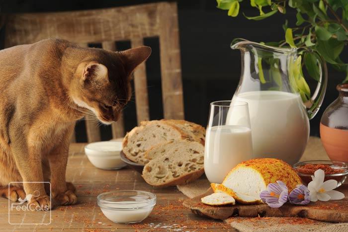leche-para-gatos-buena