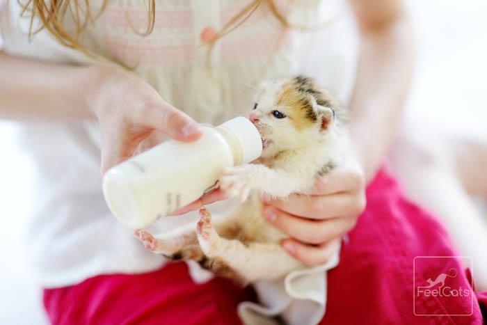 gato-bebiendo-leche