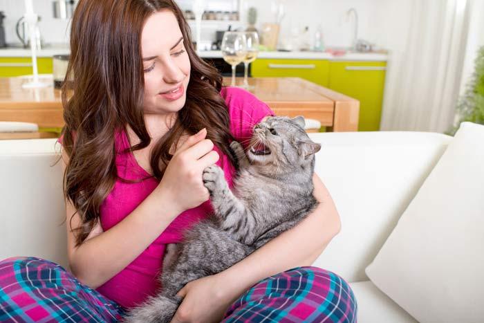 gatos enfadados bufan