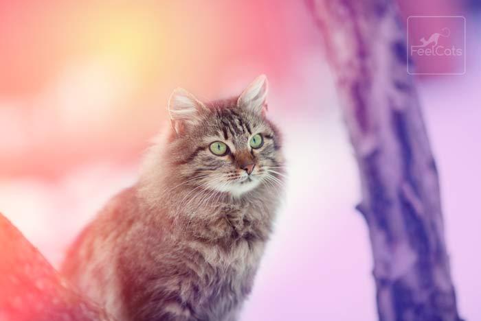sonar-gatos-significa
