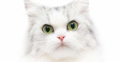 sonar-con-gatos