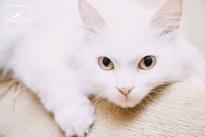 sonar-gatos-blancos