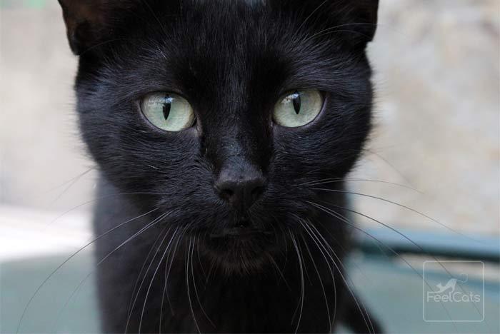 sonar-gatos-negros