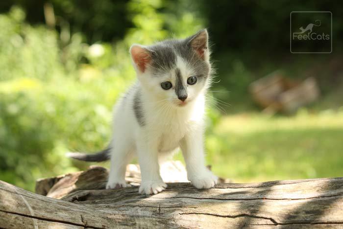 sonar-gatos-pequenos