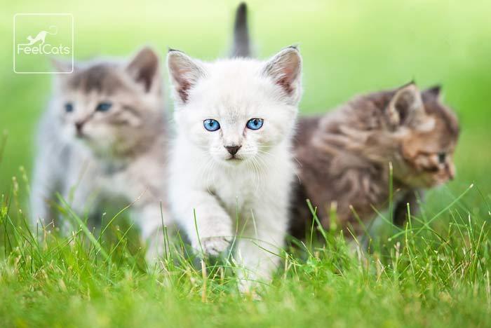 sonar-con-muchos-gatos