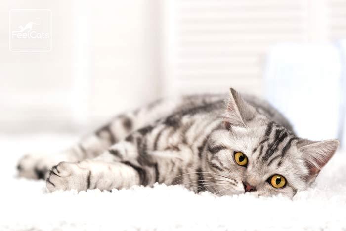 sonar-gato-gris