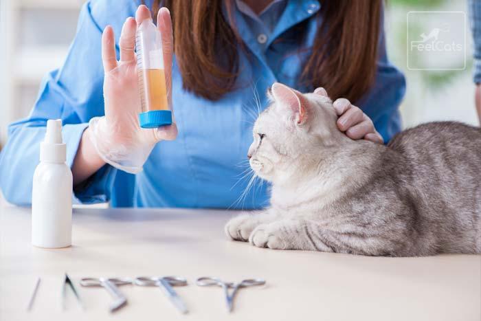 vacuna-para-gato-con-felv-o-leucemia-felina