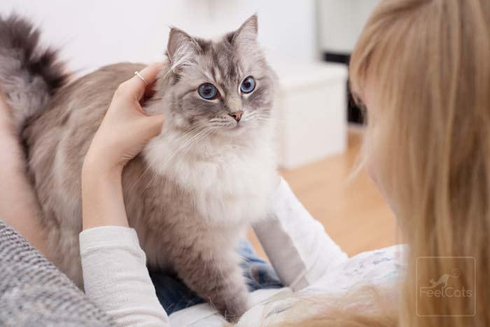 beneficios-tener-un-gato