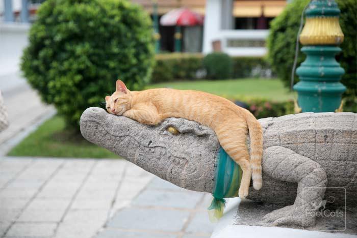 cuanto-duerme-un-gato