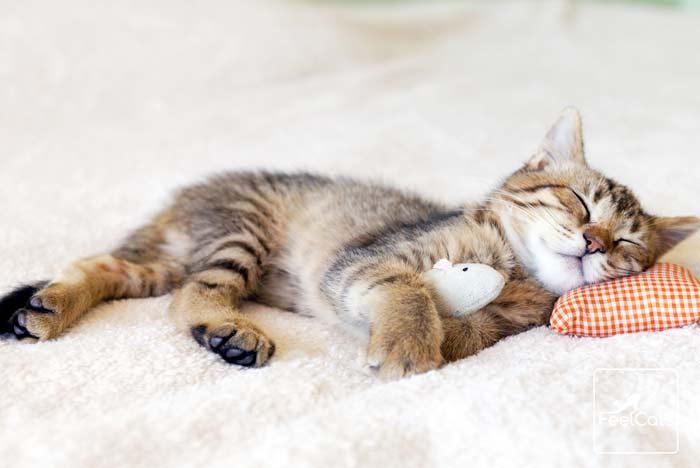 mi-gato-duerme-mucho
