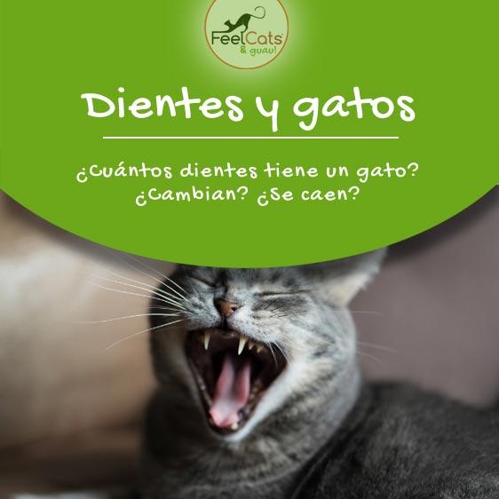 dientes-gatos-caen