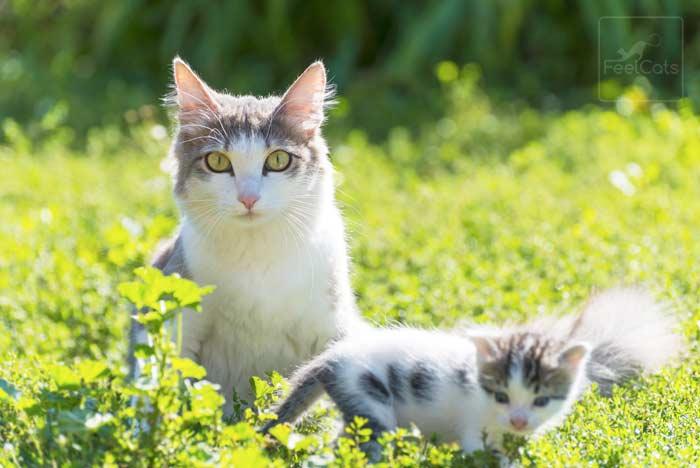 adopta-un-gato-comun