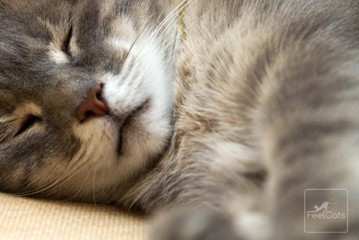 cuantas-horas-duerme-un-gato