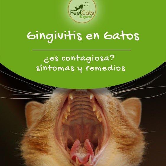 gingivitis-en-los-gatos