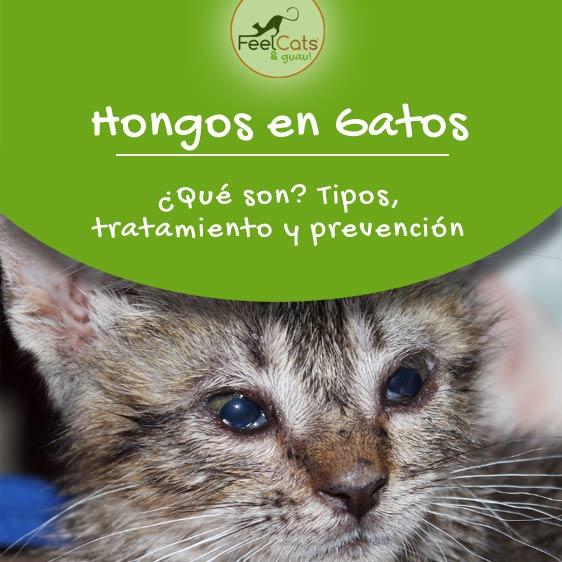 hongos-gatos