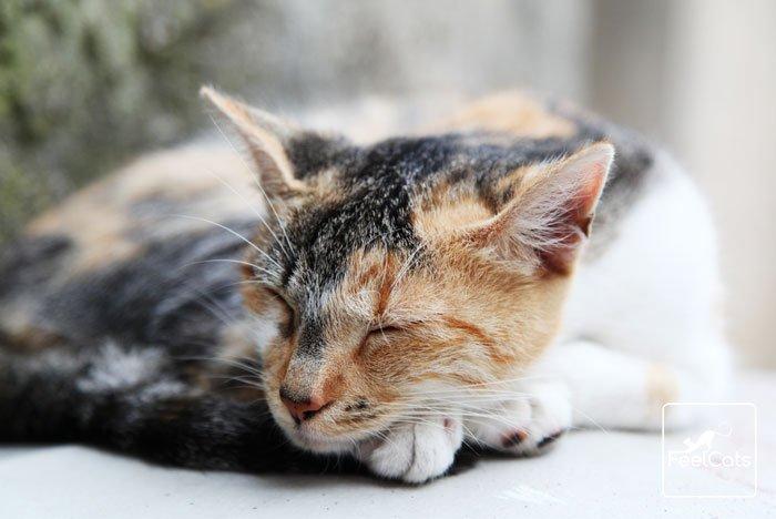 pif-gatos