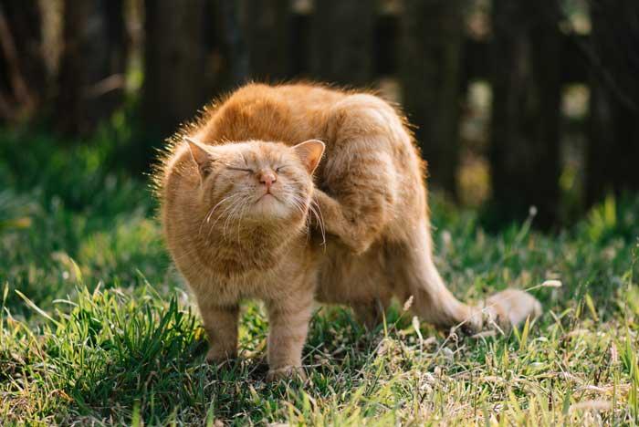 Medicamento cortar diarrea gato