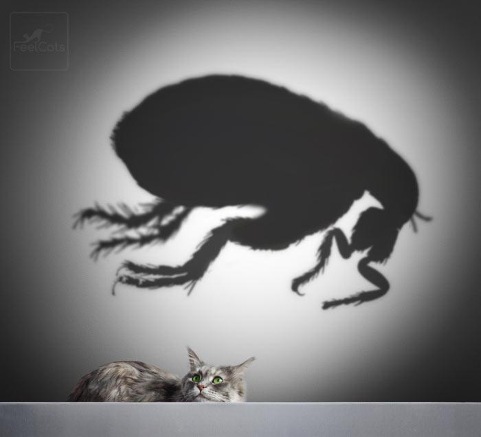 pulgas-en-gatos