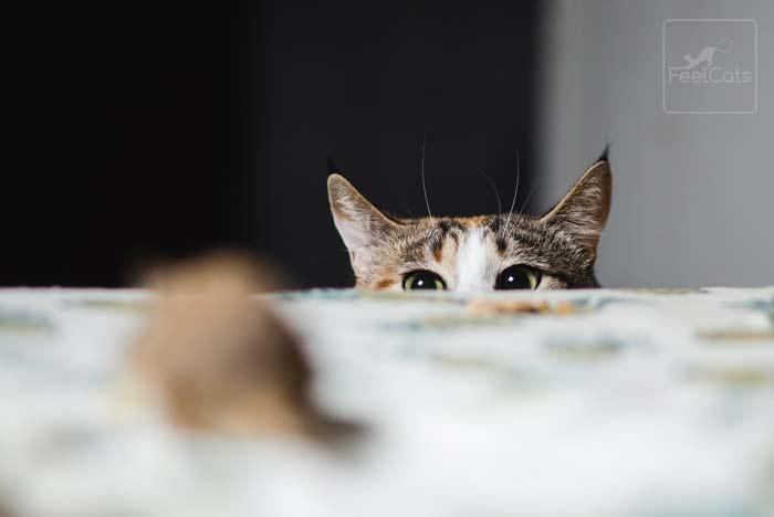 beneficio-tener-gato