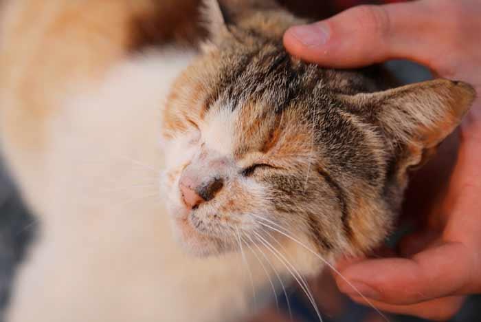 caricias-a-un-gato