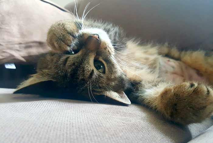 donde-como-acariciar-gato