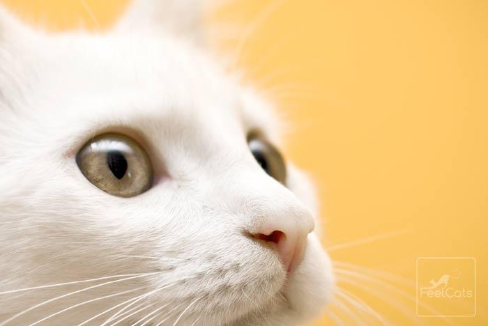 como-ven-gatos-cerca