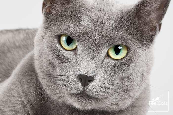 gatos-ven-color