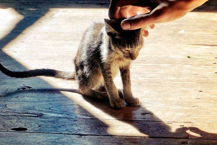 como-acariciar-gato-cabeza