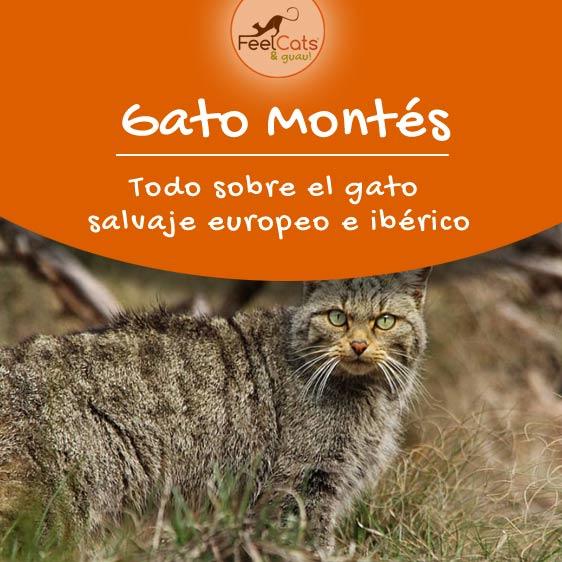 gato-montes-informacion
