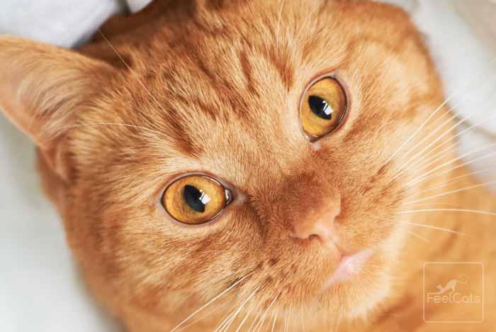 como-ven-gatos-ojos
