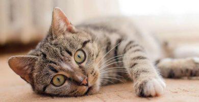 Los 5 mejores vídeos para gatos