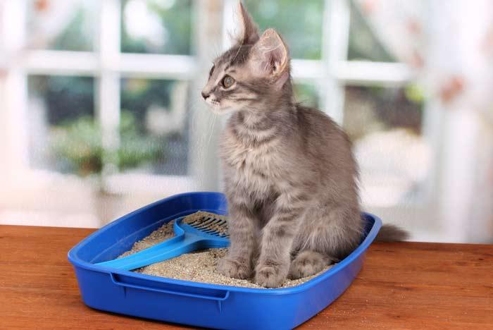 como aliviar la diarrea en gatos