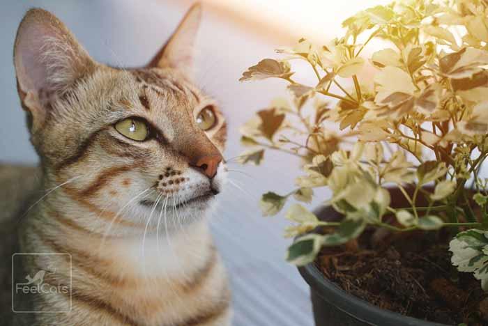 diarrea-en-gatos-tratamiento