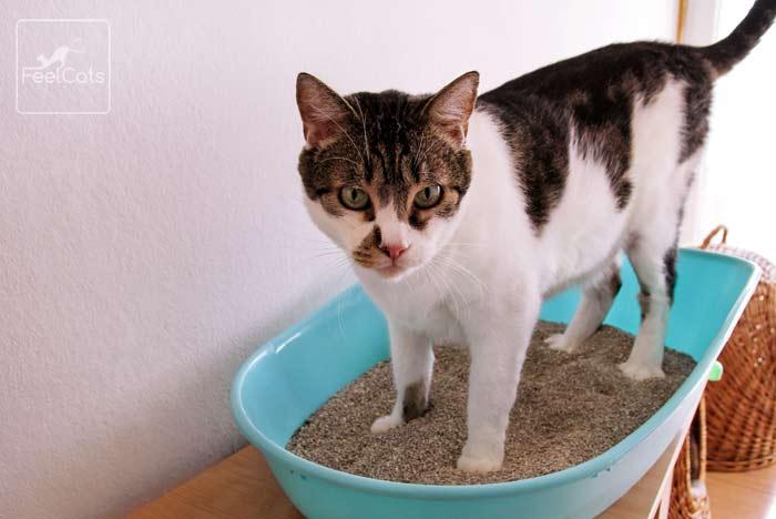 diarrea-gatos-tratamiento