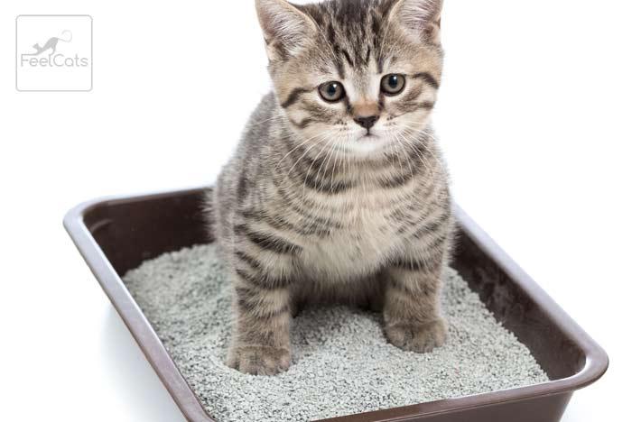 gato-bebe-con-diarrea