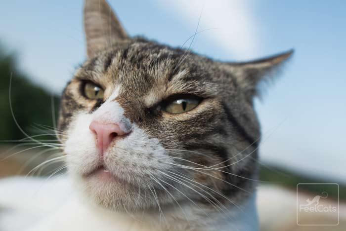 diarrea-gatos