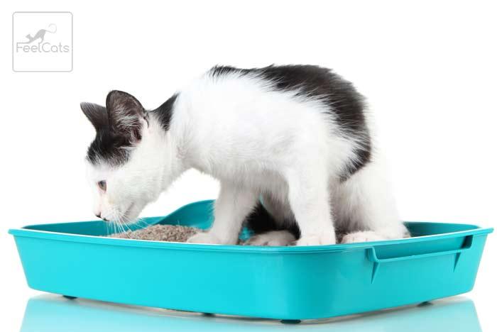 diarrea-en-gatos