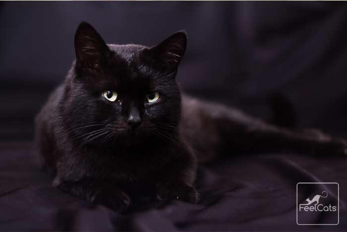 gato-negro-mala-buena-suerte