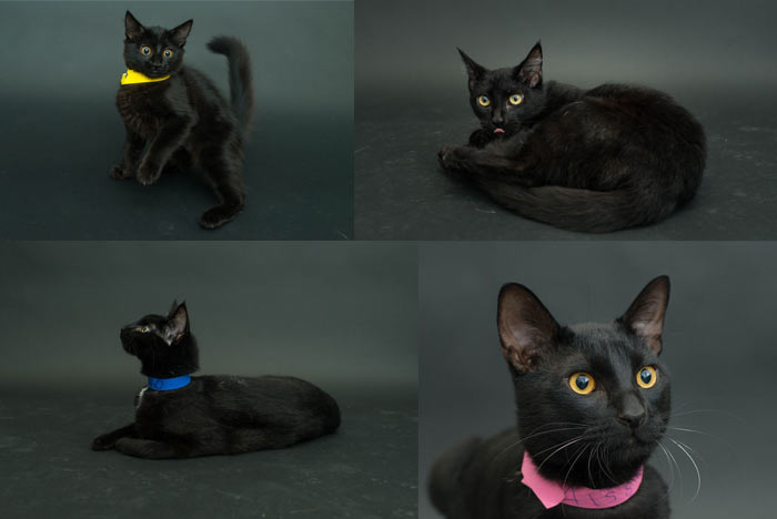 fotos-gatos-negros