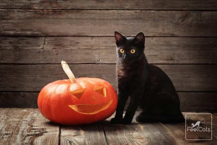gato-negro-y-brujas