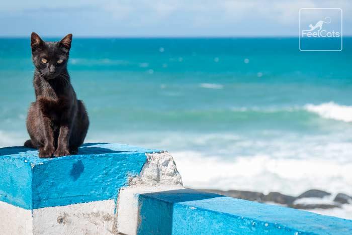 curiosidades-gato-negro