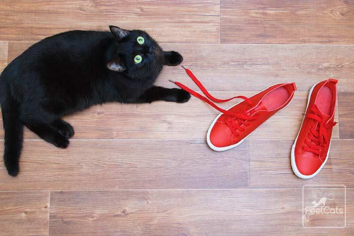 gato-negro-informacion
