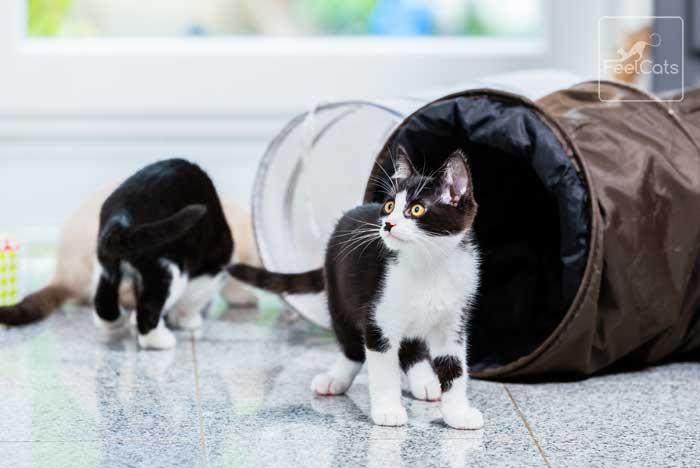 nombres-gatos-machos-hembras