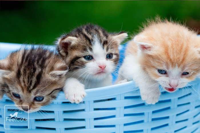 600 Nombres Para Gatos Machos Hembras Famosos Cual Eliges