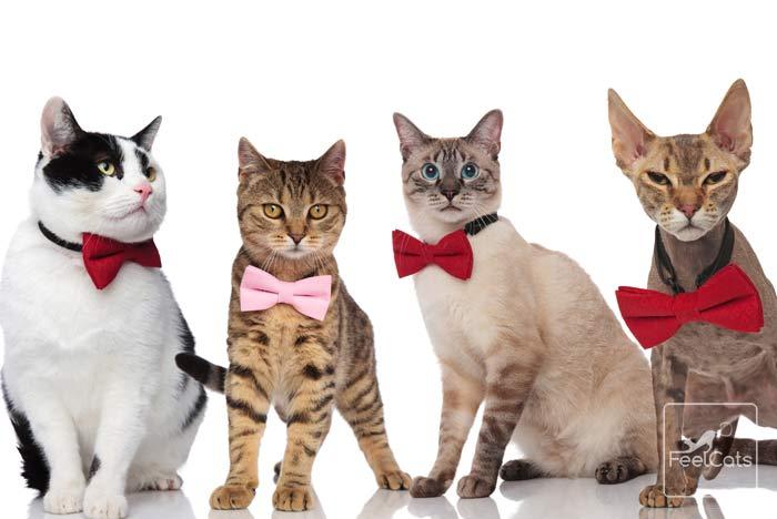 nombre-de-gatos-originales