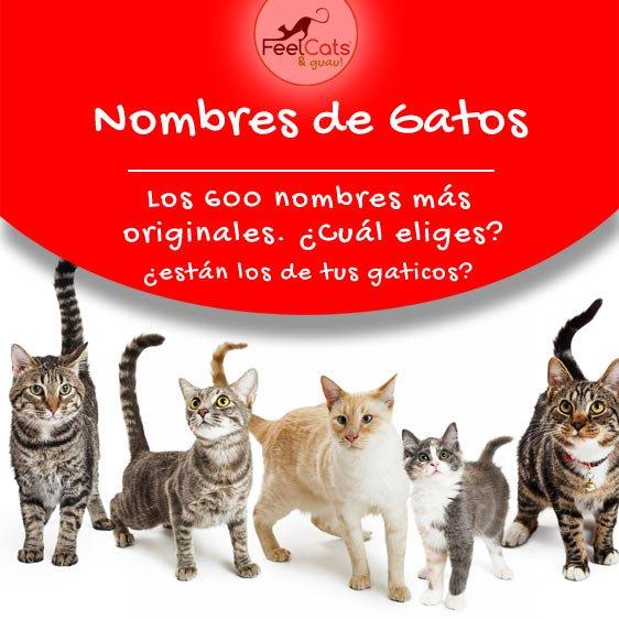 Lista de Nombres para Gatos