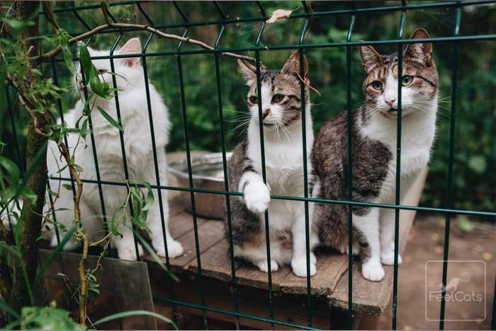 nombres-de-gatos