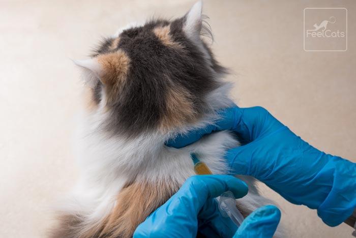 vacunas-gato