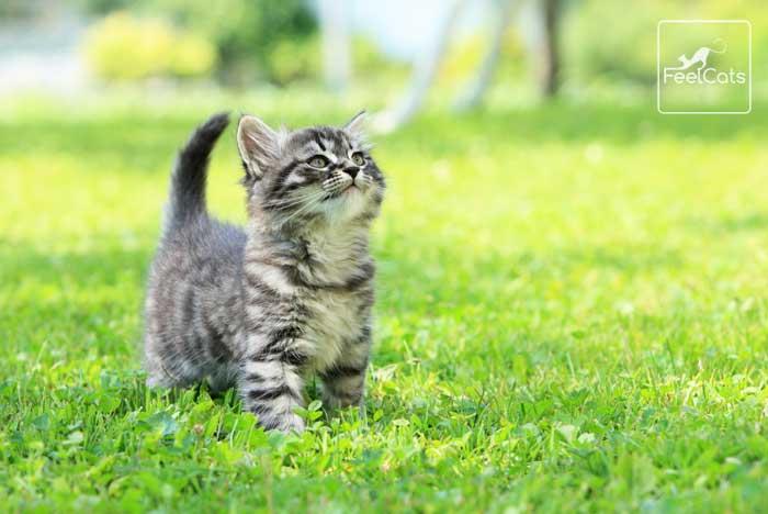 gatos-antiparasitarios-tipos