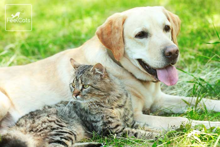 antiparasitario-gato-perro